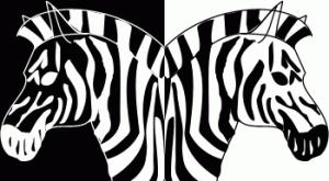 жизнь как зебра